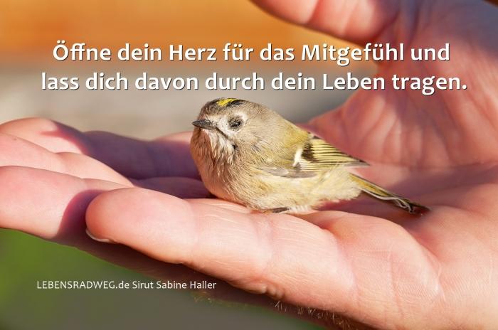 11-04-bird-1040944_1920