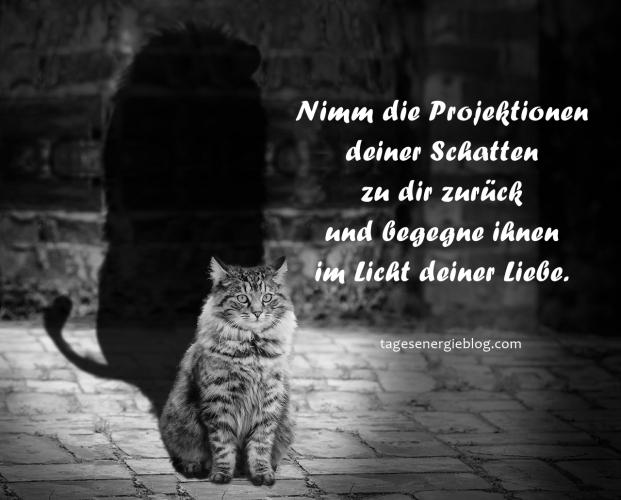 11-16-cat-564202_1280