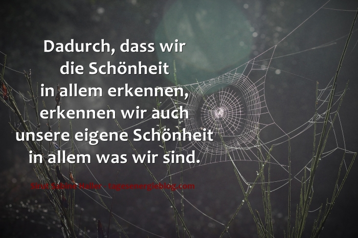 12-8-spider-web-1285293_1920