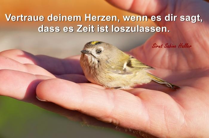 2-5-bird-1040944_1920